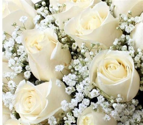 imagenes de flores blancas significado cu 225 l es el significado de las rosas blancas 4 pasos