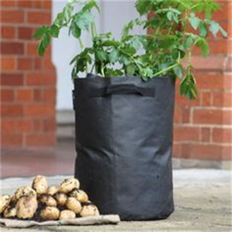1000 images about potato planters on patio