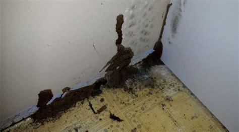 termite control nanaimo pest control