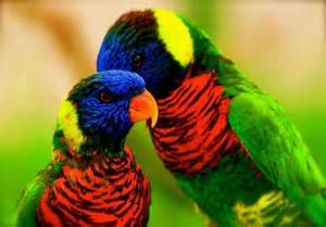 colorful bird amazing world beautiful colorful birds nature