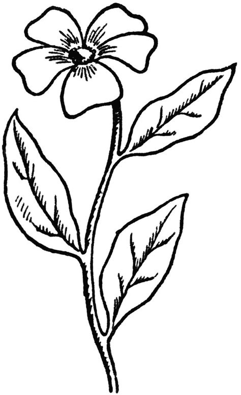 Drawings 8 Embroidery Software by Flower Drawings Easy Coloring Pages For Adults Coloring