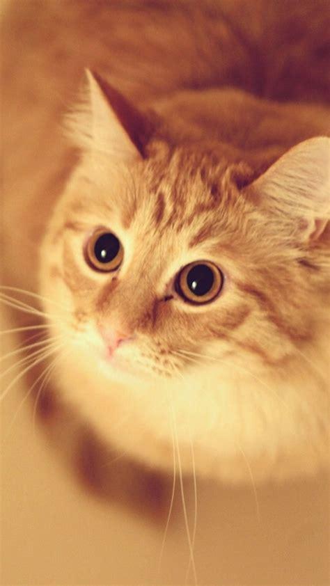 cute pet kitten cat animal blur iphone  wallpaper cats