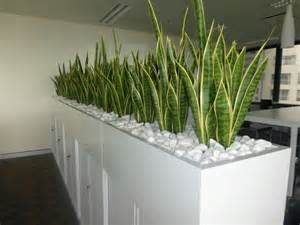 Plant Room Divider by Planter Box Of Mother In Law S Tongue For A Corporate