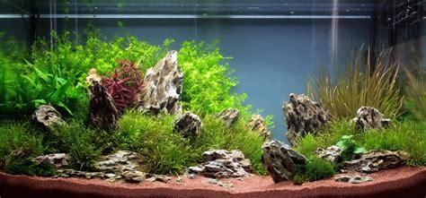 aquascape designs inc cuisine aquascaping aquariums archives ron beck designs