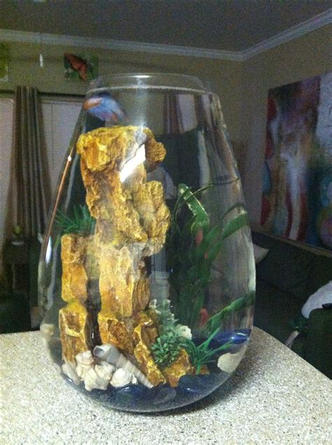Betta Fish Vase by Pin By Shekinah Smith On Betta Luvin