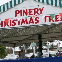 pinery christmas trees 16 reviews christmas trees
