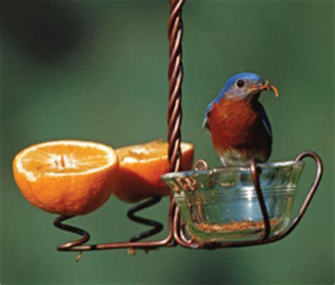 choosing wild bird foods duncraft s wild bird blog