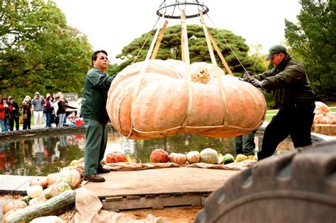 new york botanical garden pumpkin carving pumpkin carving weekend at nybg heydoyou lifestyle