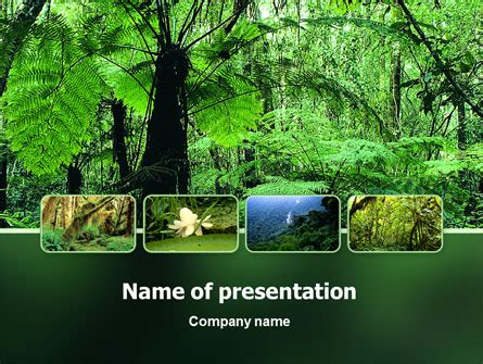 rainforest powerpoint templates and backgrounds for your
