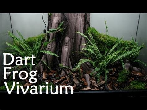 sale completed dart frog vivarium youtube
