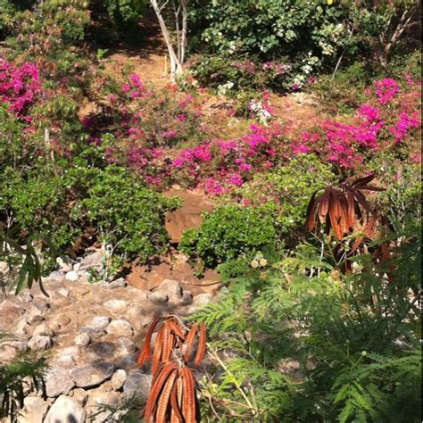 botanical garden kona hi kona pinterest