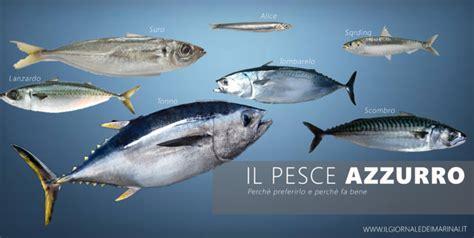 cucinare il pesce azzurro pesce azzurro perch 232 preferirlo e perch 232 fa bene