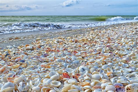 best beaches for seashells sanibel island fl the world s best shelling beaches
