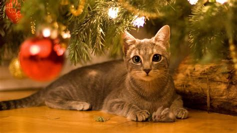 cat xmas wallpaper christmas wallpaper with cats 55 images