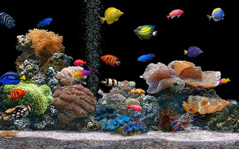 free 3d free live hd wallpaper fish aquarium 3d desktop