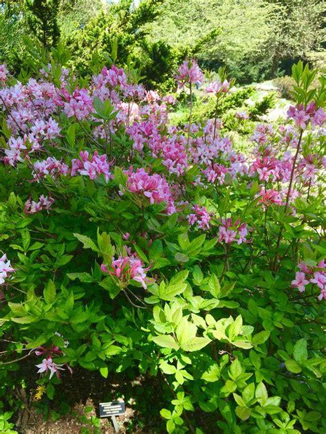 giardino botanico alpinia giardino botanico alpinia lago maggiore