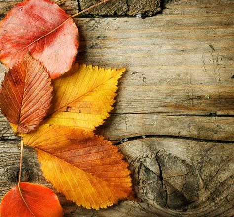 wooden background  autumn leaves gallery