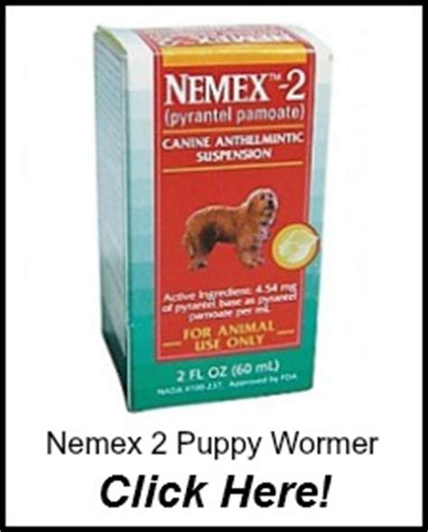 side effects of deworming a puppy puppy wormer worming puppies