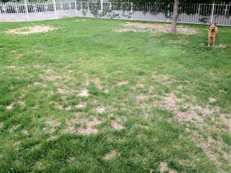 How To Fix A Backyard by Grass How Can I Fix A Lawn Which Has Become Patchy Gardening Landscaping Stack Exchange