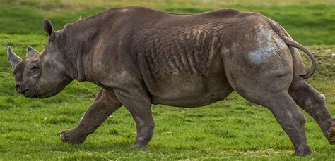 discount vouchers doncaster wildlife park yorkshire wildlife park foundation gives double boost to