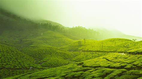 4k wallpaper kerala tea plantation in kerala wallpaper wallpaper studio 10