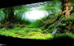 Wood For Aquascaping 7 Zaručen 253 Ch Způsobů Jak Ochladit Vodu Ve Vašem Akv 225 Riu