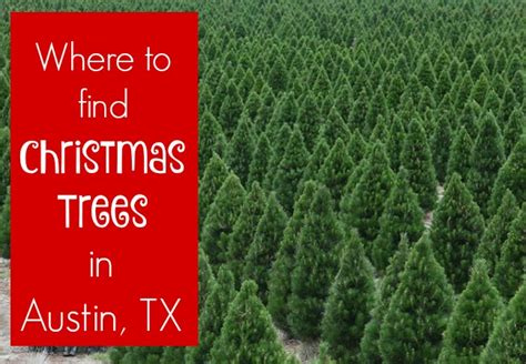 where to find live christmas trees in austin texas