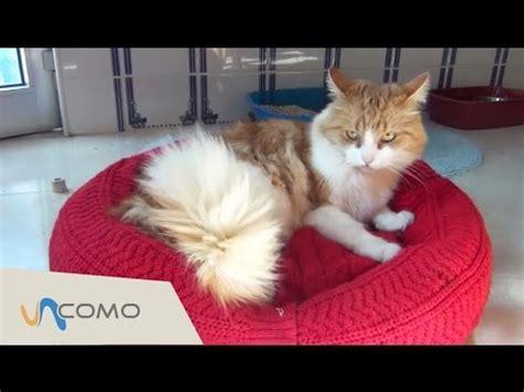 camas para gatos caseras cama para gatos de expertoanimal 161 muy f 225 cil de hacer