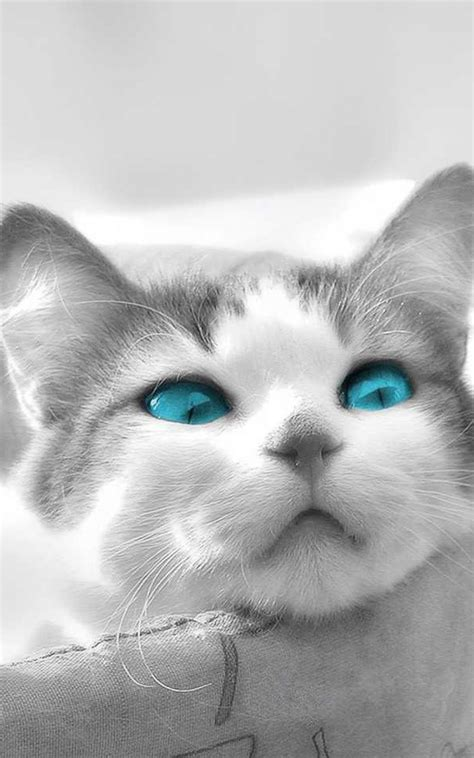 wallpaper cat for android cat playing wallpaper for android free download gamefree