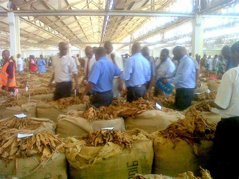 The Auction Floor by Tobacco Prices Up In Malawi Auction Floors Malawi