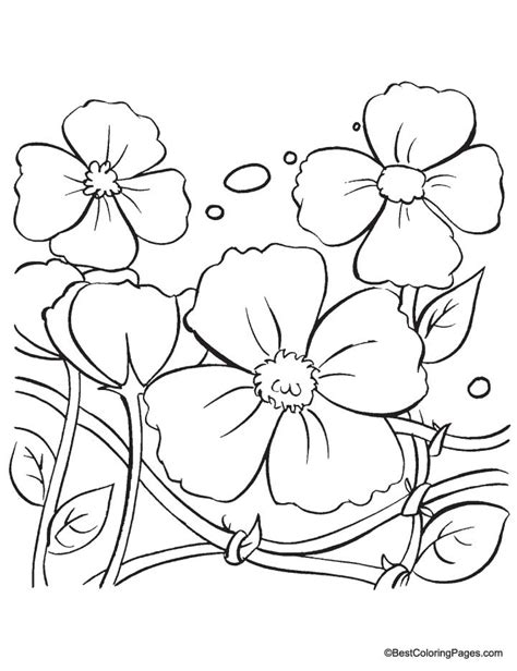 draw a poppy coloring pages