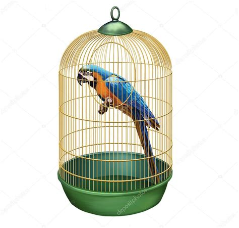 Bird Cage Stock Images Image 24110704 Parrot In A Retro Cage Big Blue Macaw Ara Ararauna In