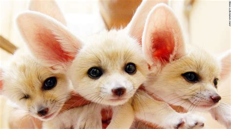 worlds cutest are these the world s cutest creatures cnn