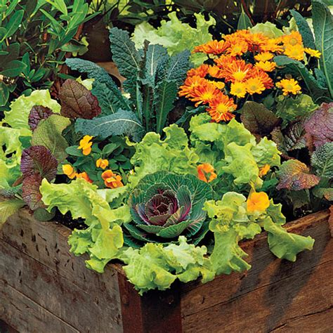 lettuce container garden how to grow lettuce southern living