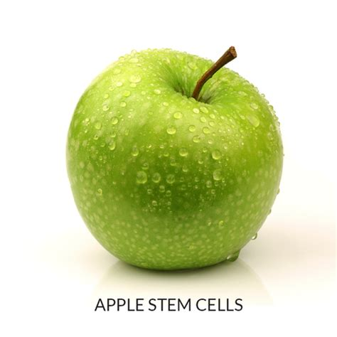 apple stem cell our natural ingredients or 205 k 204