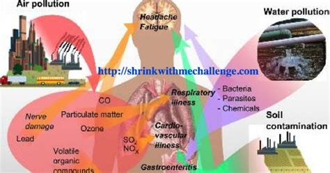 What Order Should You Detox Your by Shrink With Me Challenge Total Changes Iaso Product