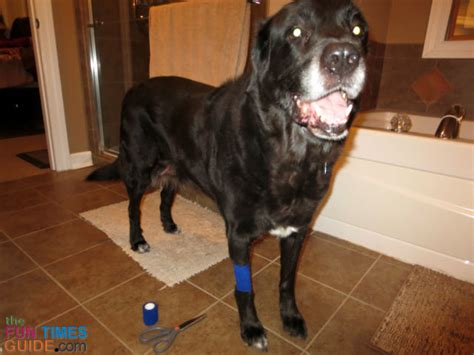 how to treat hotspots on dogs how to treat a spot this home remedy for