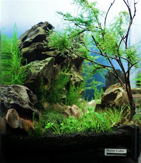 cube aquarium aquascape dennerle nano cube 174 contest 2013 quality test results