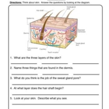skin worksheet 1