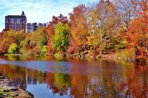 fall colors map maps central park conservancy creates nyc fall