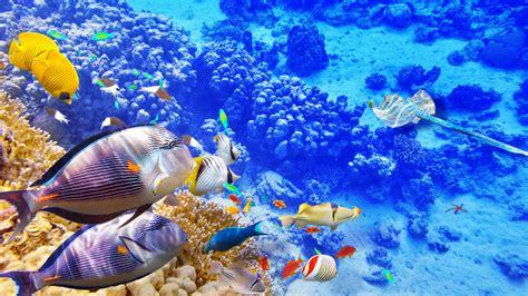 wallpaper blue sea underwater world coral tropical