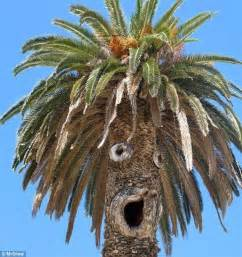 the shaggy palm tree attractive thin hair for every pareidolia makes see faces in random objects