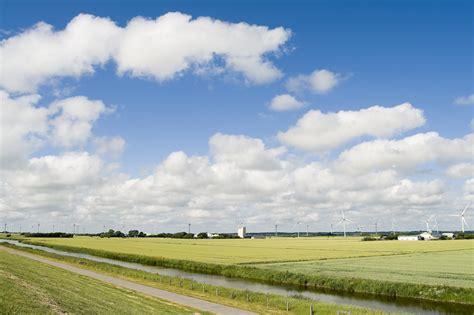 vorhänge vögel der himmel 195 188 ber nordfriesland birding and bird