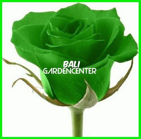 Jual Bibit Bunga Mawar Di Palembang jual bibit benih biji bunga mawar hijau green import di lapak lohan store lohanstore
