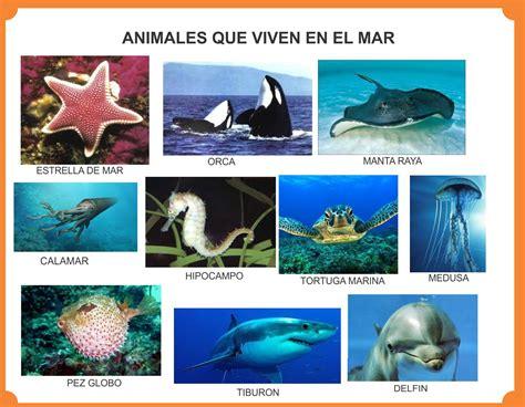 Imagenes De Animales Que Viven En El Mar | animales que viven en el bosque selva mar r 237 os