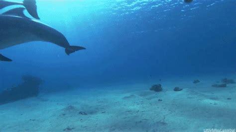 Gif Animals Science Sharks Biology Marine Biology Behavior - my gif animals animal underwater ocean marine life