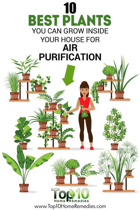 best indoor plant 25 best ideas about air purify plants on best