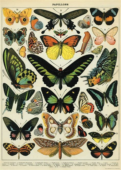 free printable butterfly wrapping paper amazon com cavallini co butterflies decorative