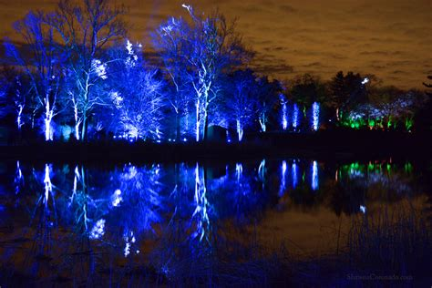 holiday lights at morton arboretum illumination shawna