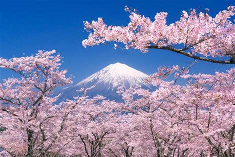 giappone in fiore passeggiata virtuale testimoni di geova forum